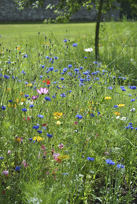 Sekku & Kidsilk Wild Flowers