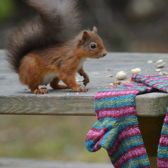 Knitting Squirrel Sale Page