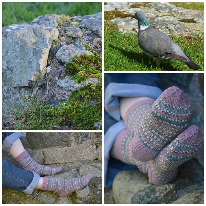 WYS Wood Pigeon Socks