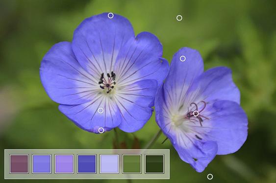 Geranium Colour Inspiration