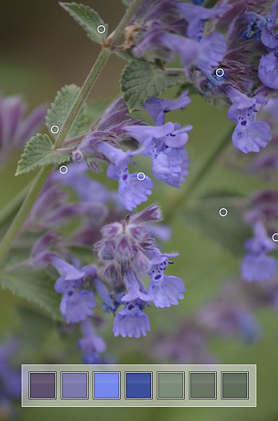 Nepeta Colour Inspiration