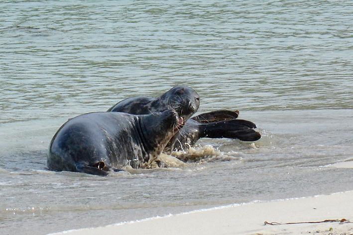 Seals Spiggie 10