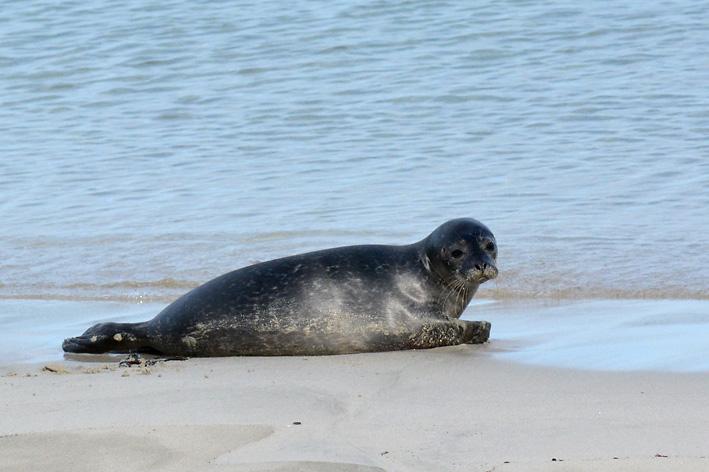 Seals Spiggie 3