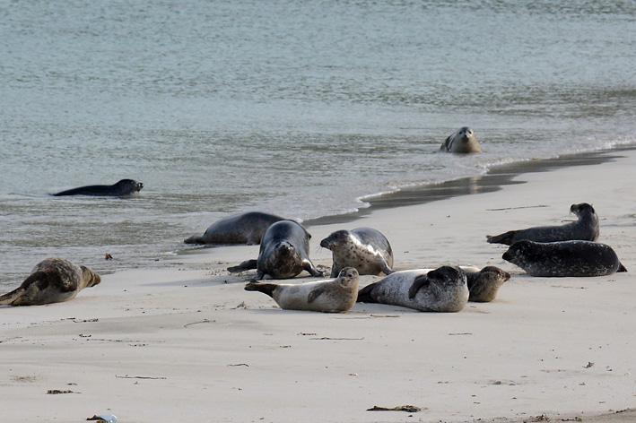 Seals Spiggie 4