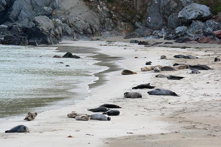 Seals Spiggie 7