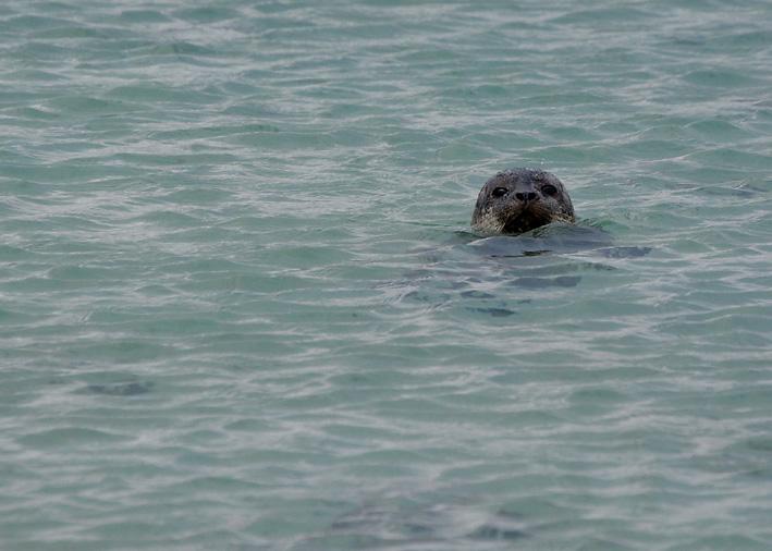 Seals-on-Minn-Beach-1