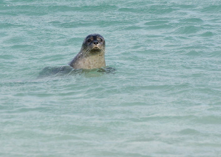 Seals-on-Tombolo-2