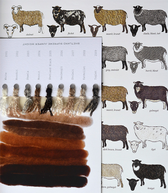 Shetland Sheep Colours