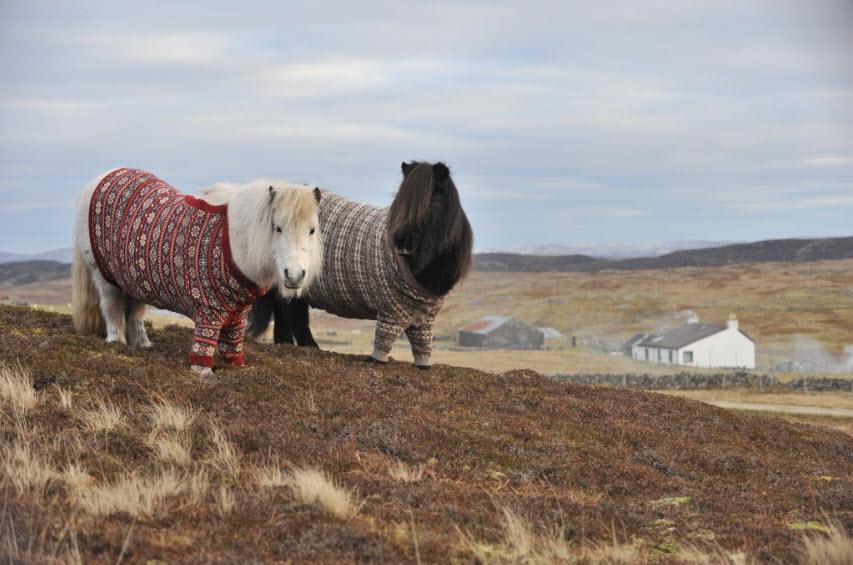 Shetland Ponies Cardigans