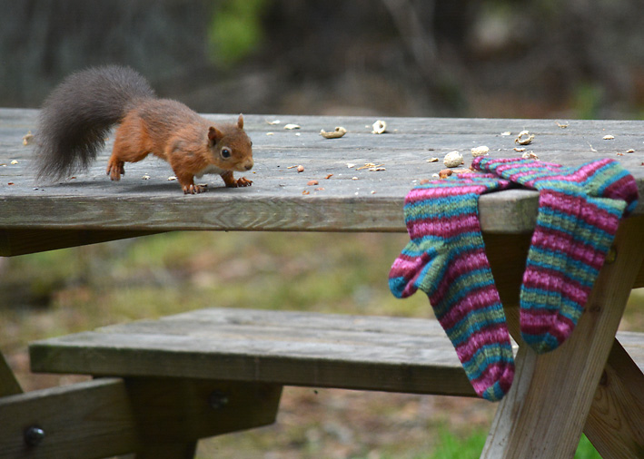 Red Squirrel and Hang Knit Socks