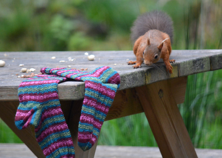 Red Squirrel and Hang Knit Socks 11