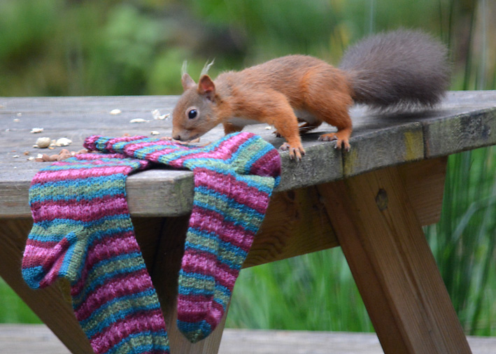 Red Squirrel and Hang Knit Socks 12