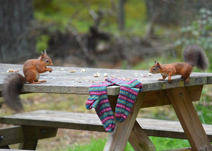 Red Squirrel and Hang Knit Socks 13