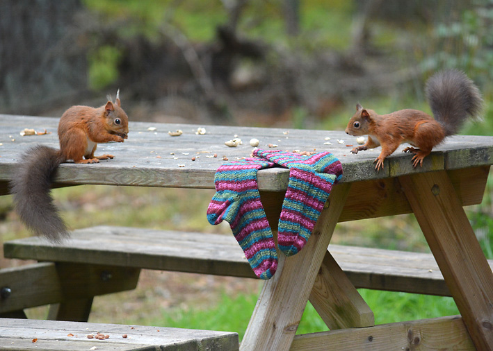 Red Squirrel and Hang Knit Socks 14
