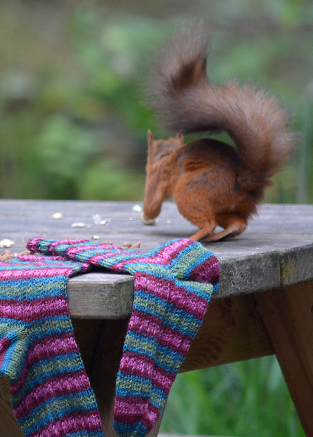 Red Squirrel and Hang Knit Socks 15