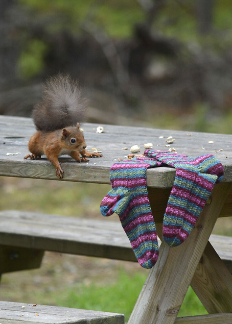 Red Squirrel and Hang Knit Socks 2