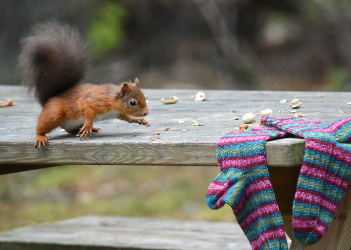Red Squirrel and Hang Knit Socks 3