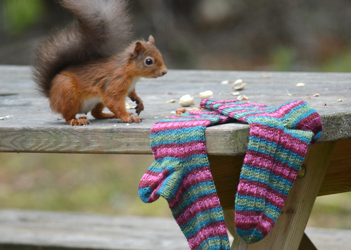 Red Squirrel and Hang Knit Socks 4