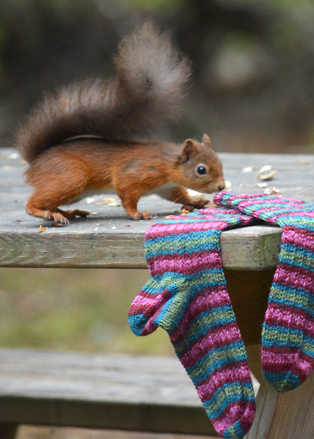 Red Squirrel and Hang Knit Socks 5