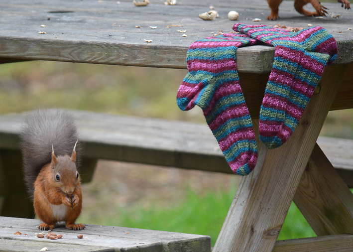 Red Squirrel and Hang Knit Socks 6
