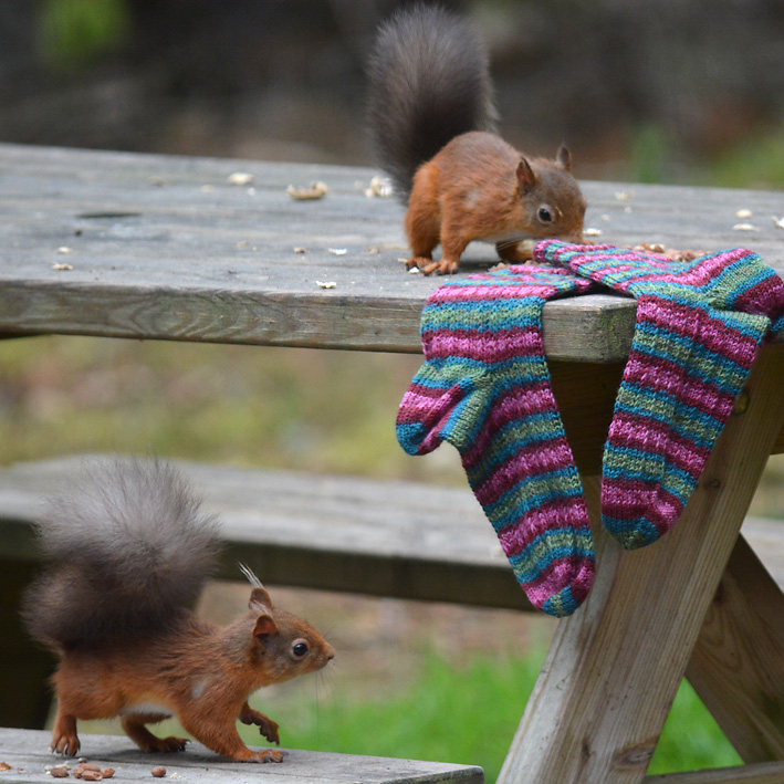 Red Squirrel and Hang Knit Socks 7