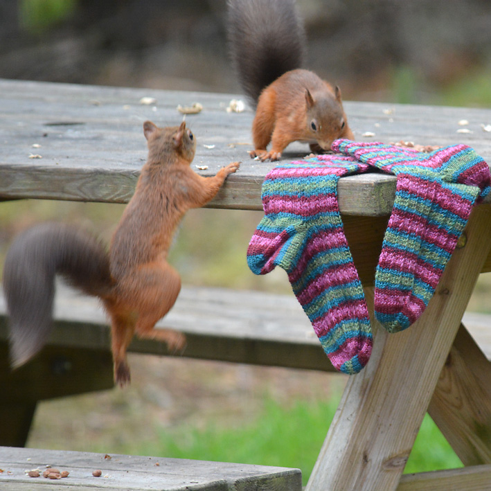 Red Squirrel and Hang Knit Socks 8